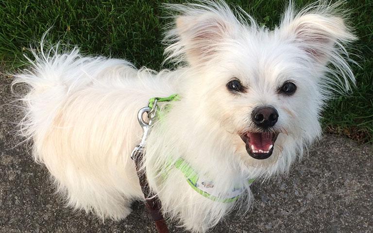 adopteddog4